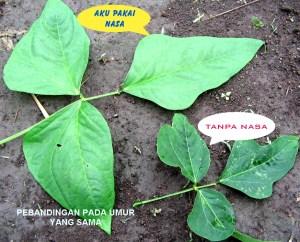 daun kacang panjang