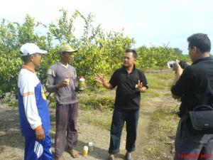 Mewawancarai pekerja kebun jeruk pak bambang